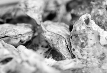 How Do Oysters Protect Themselves?