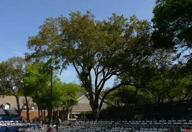 What to Plant Under the Shade of a Southern Oak Tree