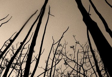 How to Use Transparency Film As Transfer