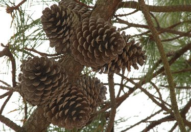 Things to Make Out of Pinecones