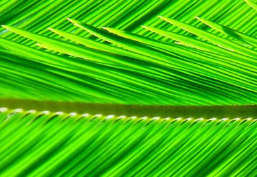 How to Make a Paper Palm Frond