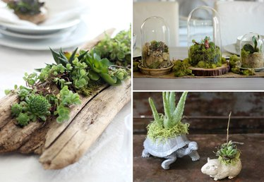 10 DIY Indoor Gardens for the Urban Gardener