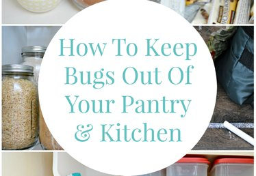 How to Keep Bugs Out of Your Pantry and Kitchen
