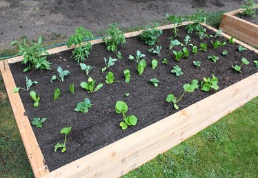 How to Plant a Raised Vegetable Garden