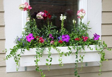 How to Plant in Flower Boxes