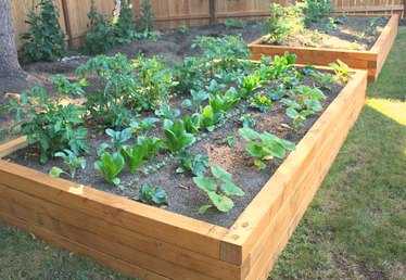 How to Build a Raised Bed Garden