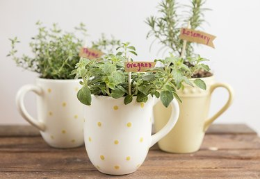 Make Mom a Mug Herb Garden