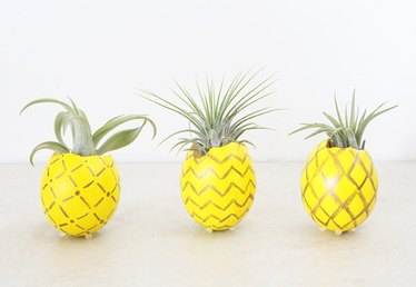 DIY Pineapple Air Plant Holder