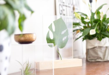 How to Make a Plexiglass Framed Leaf Home Accessory