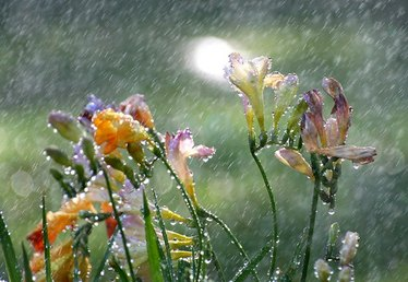 What Are the Benefits of Rain Water When Growing Plants?