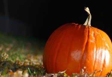 How to Get Rid of Bugs on Pumpkin Plants