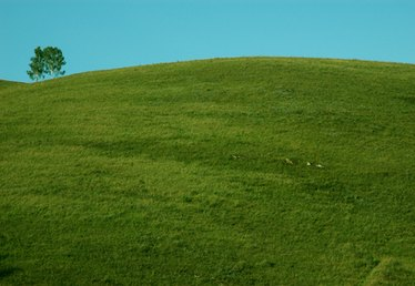 How to Grow Grass on Steep Hills