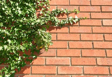 Kinds of Ivy That Grow on the Sides of Houses
