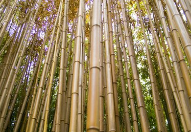 How to Make a Bamboo Waterfall