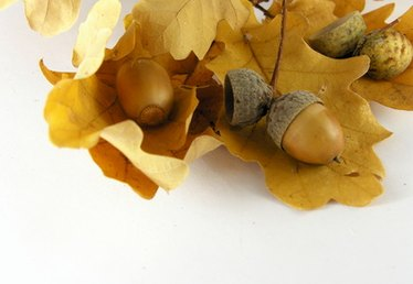 How to Make an Acorn Costume