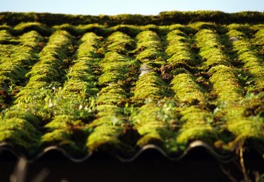 How to Get Rid of Moss on the Roof