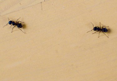 Simple Household Products to Kill Ants