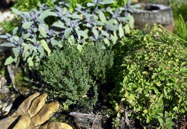 How to Plant a Winter Garden in Tennessee