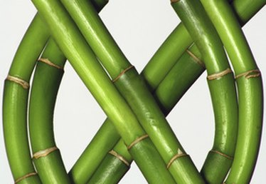 What Do the Colors of Ribbon Symbolize on Lucky Bamboo?