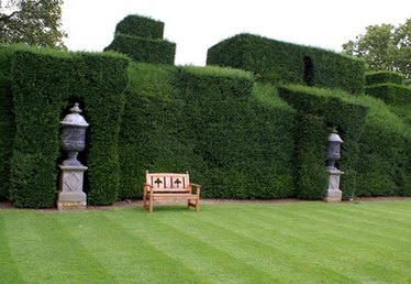 The Best Shrubs for a Privacy Screen