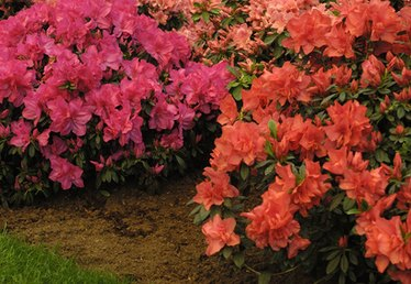 What Grows Well With Azaleas?