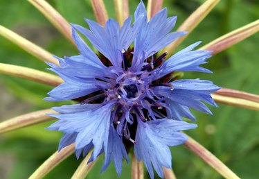 How to Mix Colors to Make Cornflower Blue