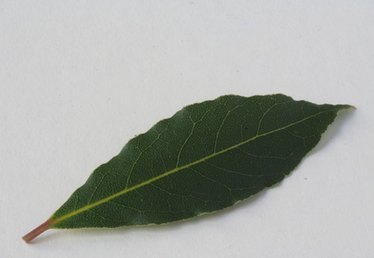 The Dangers of Bay Leaves