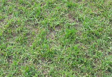 Brown Spots in the Lawn & Worms