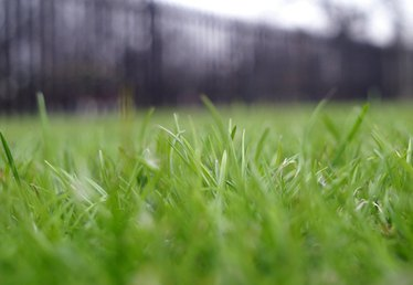 How to Sprig Bermuda Grass