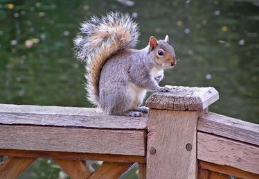 Squirrel Removal Laws in Ohio
