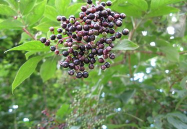 What Can I Substitute for Elderberry Liqueur?