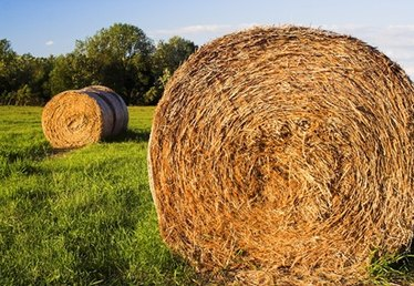 Why Do Farmers Wrap Their Hay?