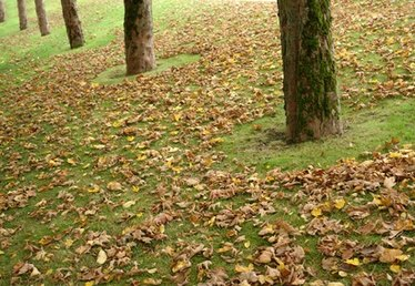 How to Rake Leaves Faster