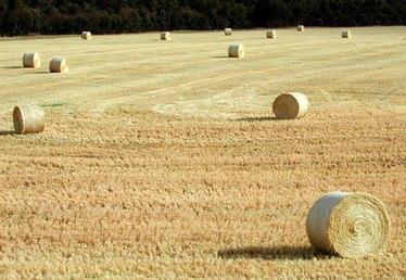How to Prepare Fields for Hay Planting