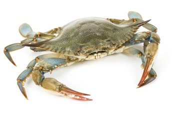 How to Raise Blue Crabs