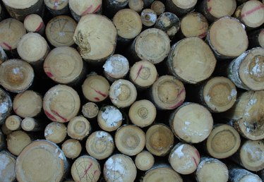 How to Treat Pine Logs