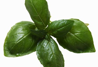 What Is the Difference Between 'Genovese' Basil & Sweet Basil?