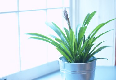 How to Remove Water Spots From House Plants