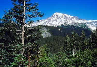 Fun Facts About Evergreen Trees in Washington State