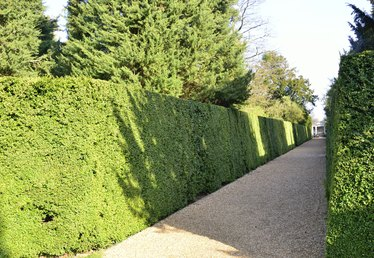 Different Types of Hedges