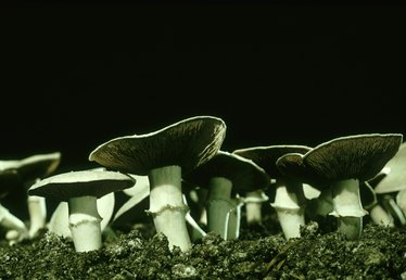How to Build a Mushroom Fruiting Chamber