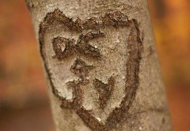 How to Carve Hearts in a Tree