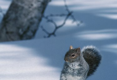 What to Do When a Squirrel Gets in Your Furnace