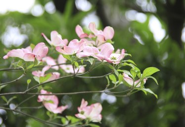Good Ornamental Trees for Planting Close to Houses