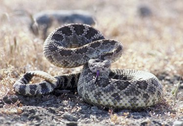 How to Keep Poisonous Snakes Away From Your House