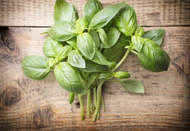 Substitutes for Dried Basil Leaves