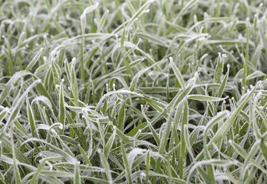 How to Successfully Plant Winter Ryegrass