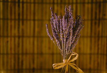 How to Keep Stink Bugs Away With Lavender
