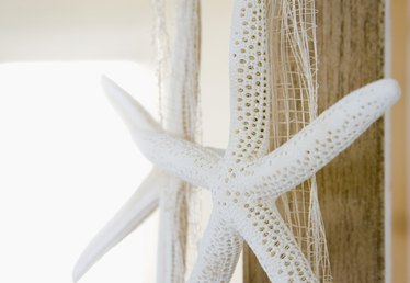 How to Hang Real Starfish on the Wall