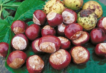 About Chestnuts